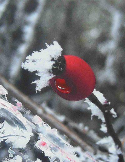Foto, Acryl auf Alu-Dibond, 40x30